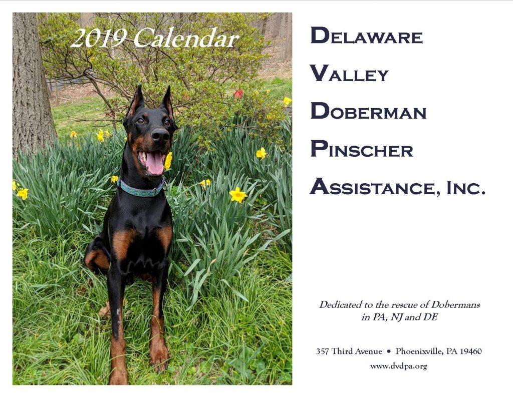 Doberman Calendar 2019