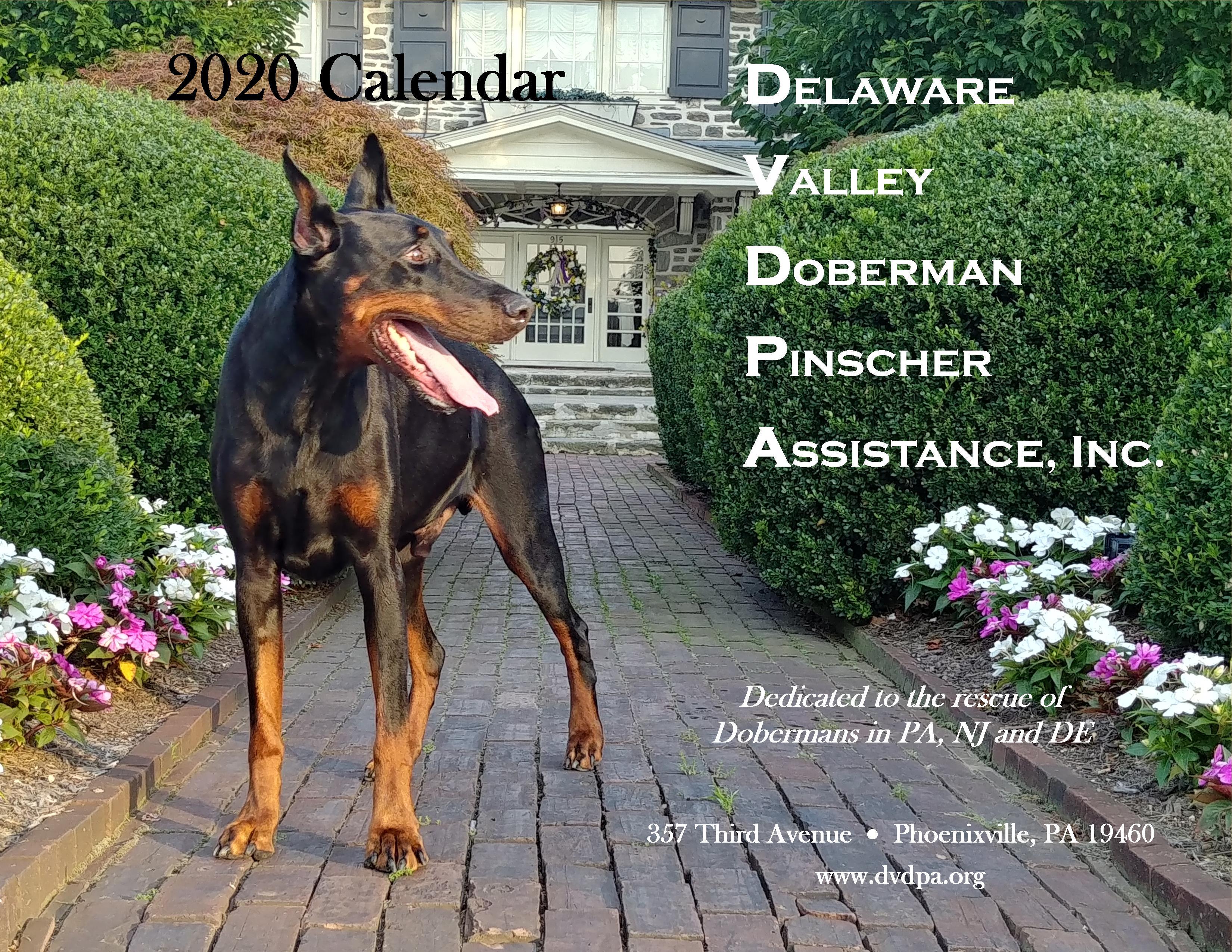 Doberman Calendar 2020
